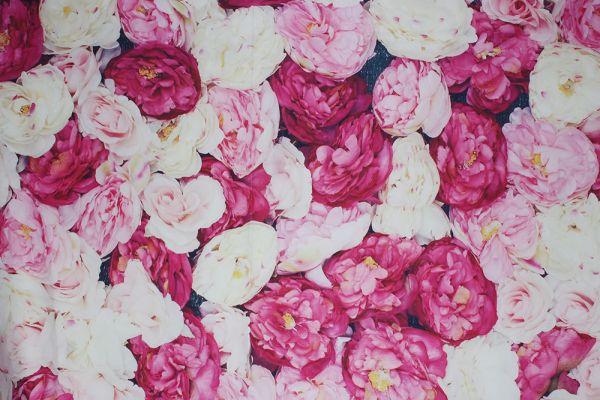 Weiße, rosa und rote Rosen